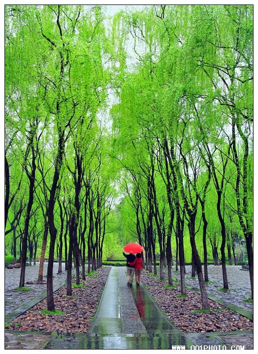 荆州亭 (原创) - 黄山松 - 黄山松的博客——