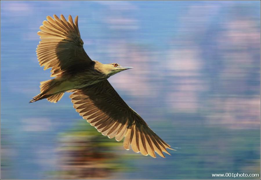 【现代诗】 在自由飞翔中找准平衡点 (原创) - 博雅.wolaxiao - 博雅.wolaxiao的博客
